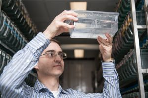 David Prober is a 2010 Rita Allen Foundation Scholar and an Assistant Professor of Biology at the California Institute of Technology. Here, Prober examines a zebrafish—his laboratory uses this species as a model for understanding sleep. (Photo: Caltech)